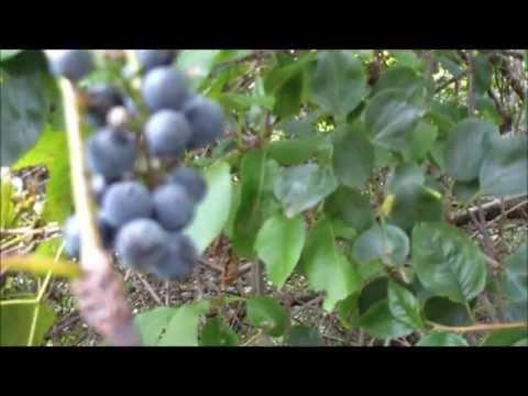 Michigan Edible/Medicinal Walk