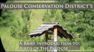 A Brief Introduction to the Birds on the Palouse