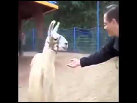 If you ain't talking money I don't wanna talk lama
