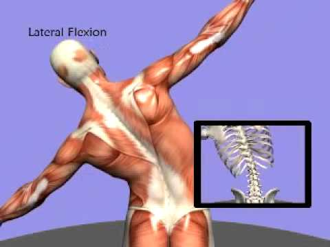 3D Back Muscles - YouTube