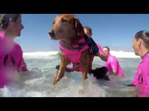 Surf Dog Ricochet's Waves of Empowerment - West & Jim bonding out