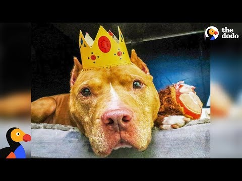 Pit Bull Dog Who Spent Life On A Chain Finally Gets To Be A Dog | The Dodo