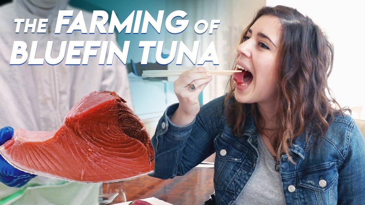 The Farming of Bluefin Tuna | Foodbeast Doc