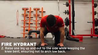 York Lions | Personal Training - Fire Hydrant