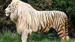 видео: 50 Самых Редких и Невероятных Животных в Мире