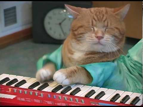 Keyboard Cat REINCARNATED!