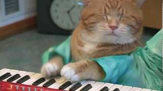 Keyboard Cat REINCARNATED!(http://keyboardcat.com REJOICE!!! The waiting is over! As predicted by Keyboard Cat Church...He is back!!! Fatso is reincarnated as