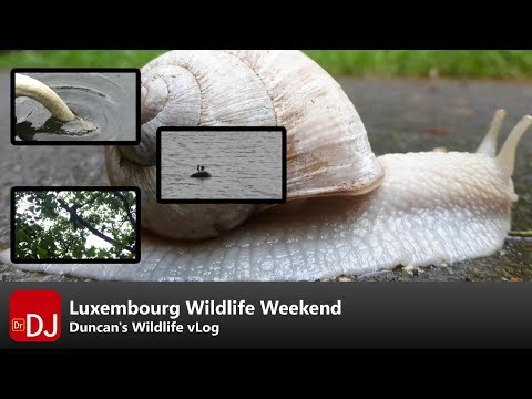 My Weekend Birdwatching in Luxembourg | vLog #9 | Nature Travel Guide