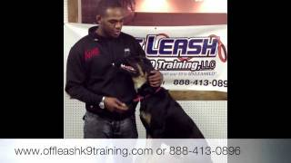 "Jon ""bones"" Jones Dog, Bj! Dog Trainer For Celebrities!"