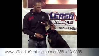 "Jon ""bones"" Jones Dog, Bj! Dog Trainer For Celebrities!"
