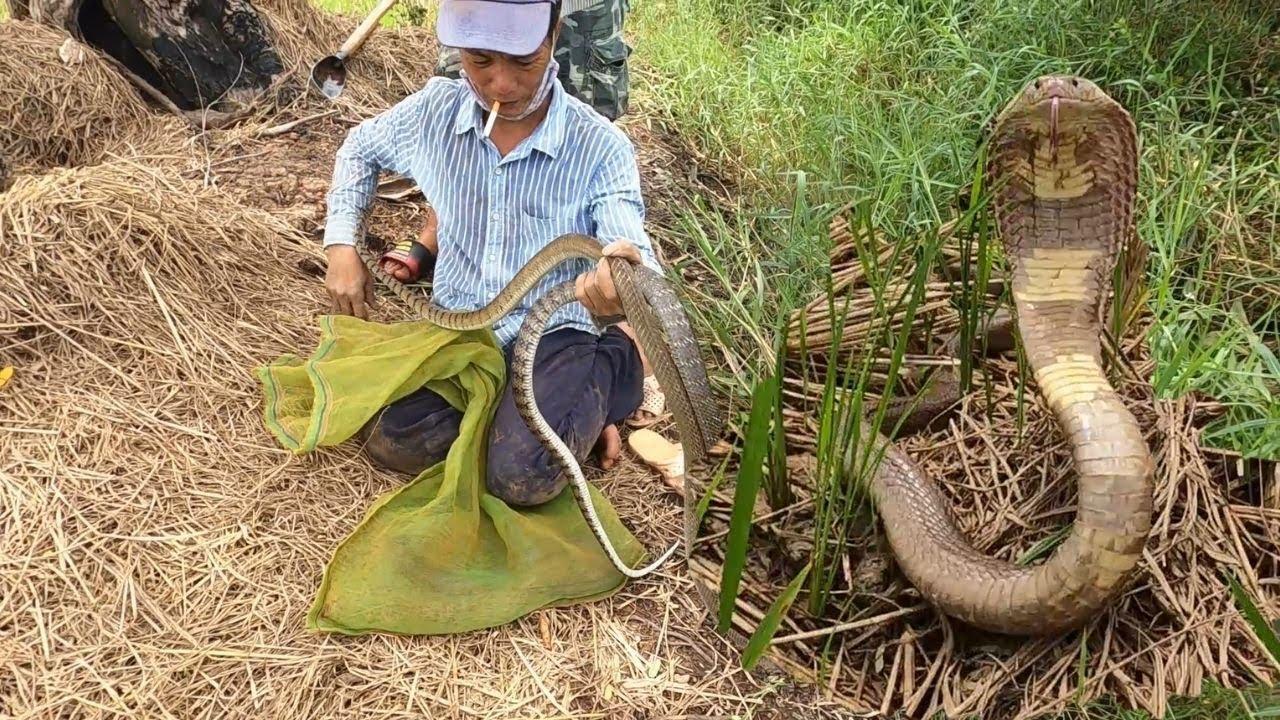 Hôm Nay Vô Mánh Bắt Trúng Ổ Rắn 04 Con Trong Khu Đất  Săn Bắt TV