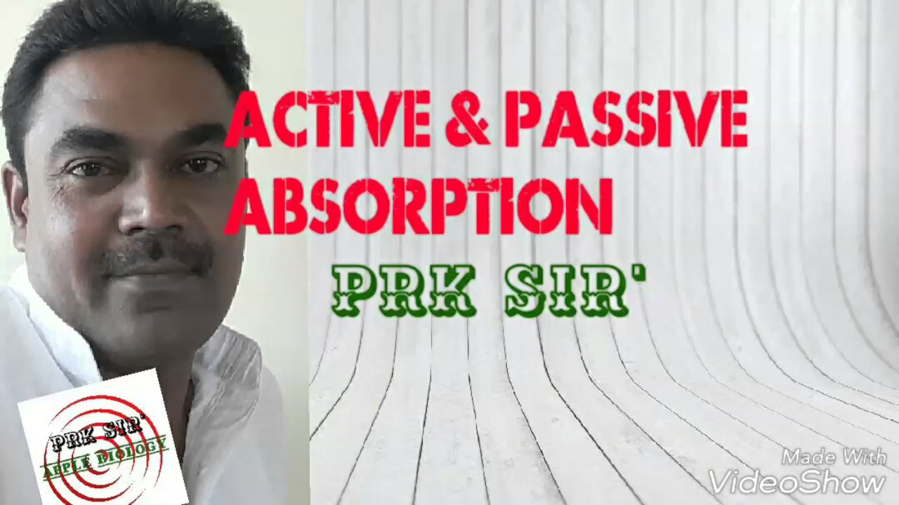 active and passive absorption