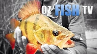 BIG REDFIN ON LURES - OZ FISH TV