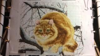 Вышивка крестиком. Рыжий кот. Золотое руно. Отчёт 8