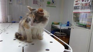 Бездомная кошка.Ульяна