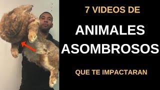 7 Vídeos de Animales Asombros te que Impactaran l Pasillo Infinito