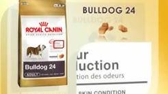 Royal Canin Bulldog Nutrition