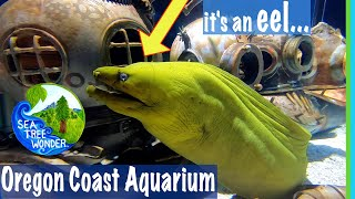 SEAPUNK Art & Ocean Wildlife Inspiring Imagination at the Oregon Coast Aquarium