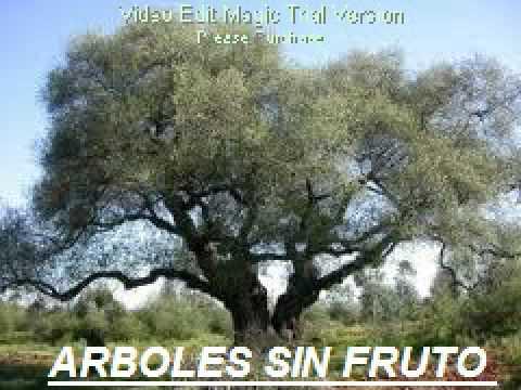 035 arboles sin fruto pedro alcocer r reuniones