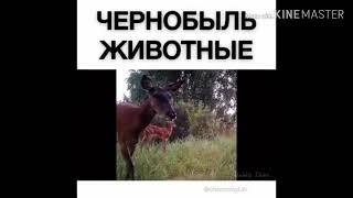 Чернобыль. Мутации животных. Ужасные вещи в Чернобыле!!!