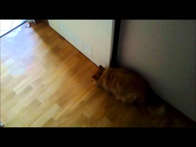 cat and skittles