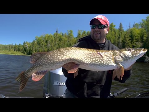 Post-Spawn Pike - In-Depth Outdoors TV, Season 10 Episode 2