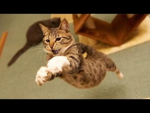 Cats Jumping Most Funny Jumping Cats Fail - Funny Cats Jumping and Missing Video Compilation