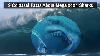 9 Colossal Facts About Megalodon Sharks