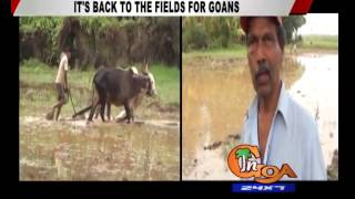 IT'S BACK TO THE FIELDS FOR GOANS