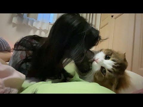 うるさいスマホを肉球で止め、起きない娘を実力で起こす猫