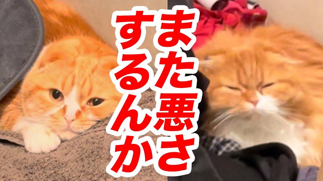 【まるお&もふこ】また悪さするんか!!【洗濯部屋編】#Shorts