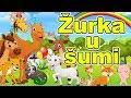 Žurka u šumi - HIT pesmica za decu | Dečija pesma o životinjama | The Animal song | Forest Party