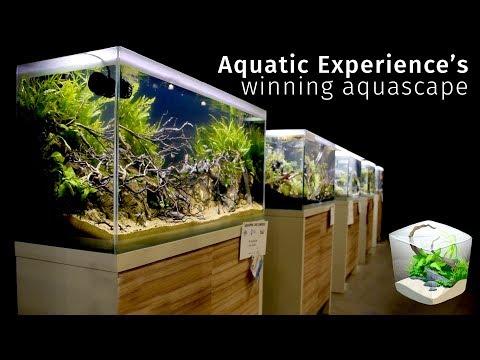 Beautiful River Aquascape — Winning the Aquatic Experience