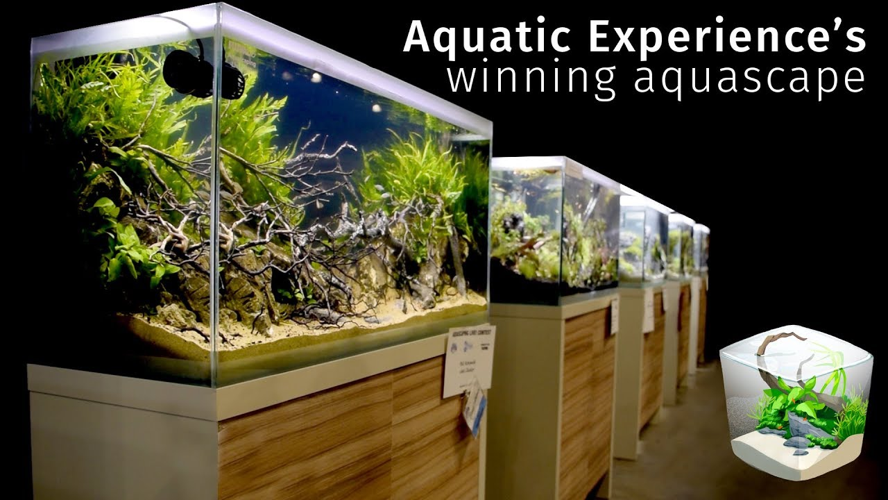 Award Winning Aquascapes - House of Things Wallpaper