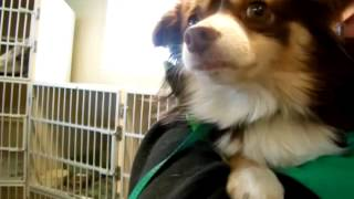 Video Of Adoptable Pet Named Chachi Aka Tater