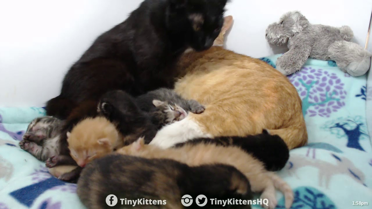 The Chlomance continues - TinyKittens.com