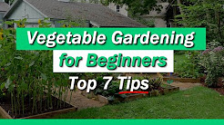 Vegetable Gardening for Beginners - 7 Tips You Must Know