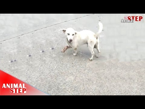 Three-Legged Dog After Being Rescued – Watch His Life At The Ending!