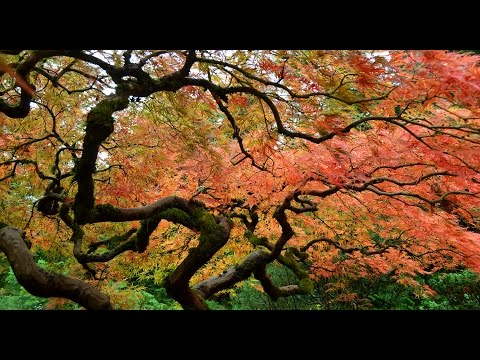 Portland Japanese Garden 20141025 1080p HD
