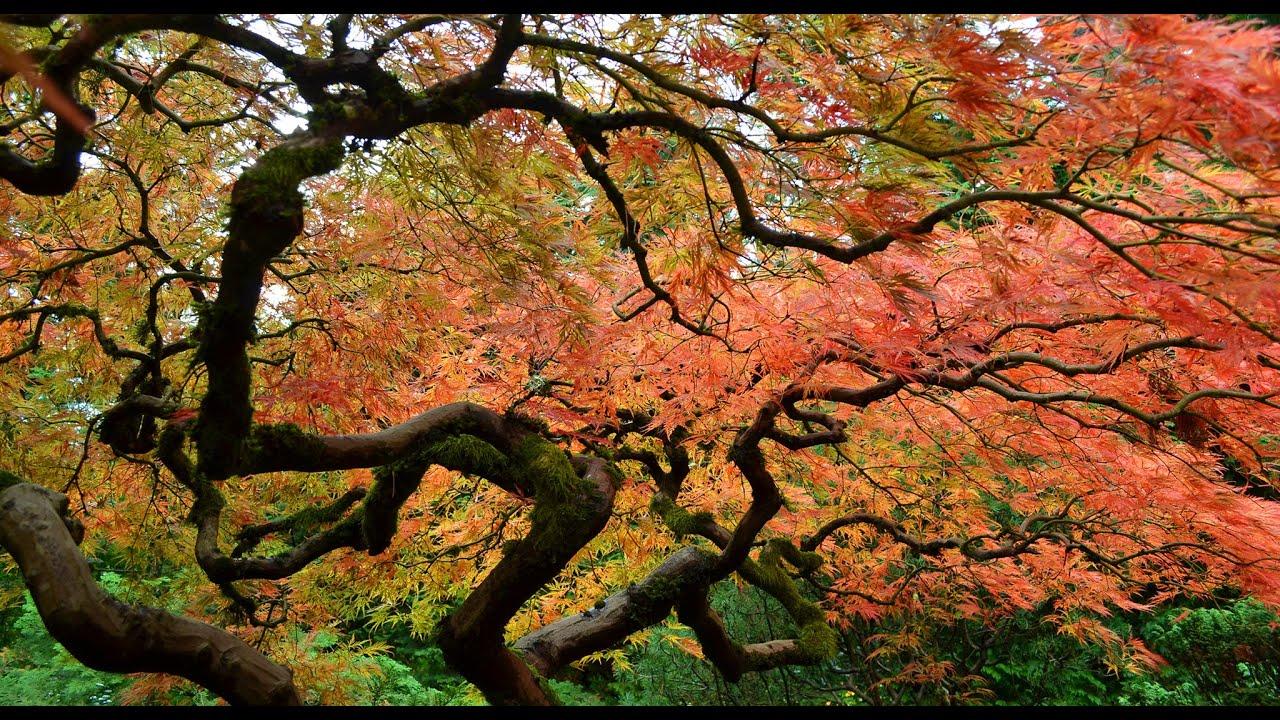 Portland Japanese Garden 20141025 1080p HD - YouTube