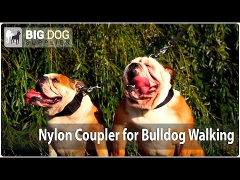Walking Two Bulldogs - Easy and Comfy with Durable Nylon Dog Coupler