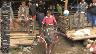 The Pig Market Toraja Sulawesi Indonesia