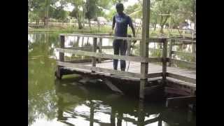 Crocodile park, Miri, Malaysia -6