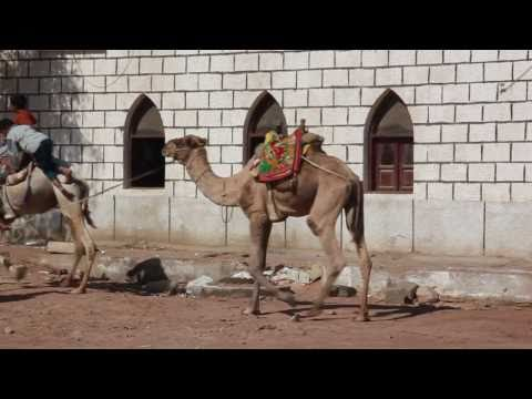 Journey to Sinai, a Travel Log