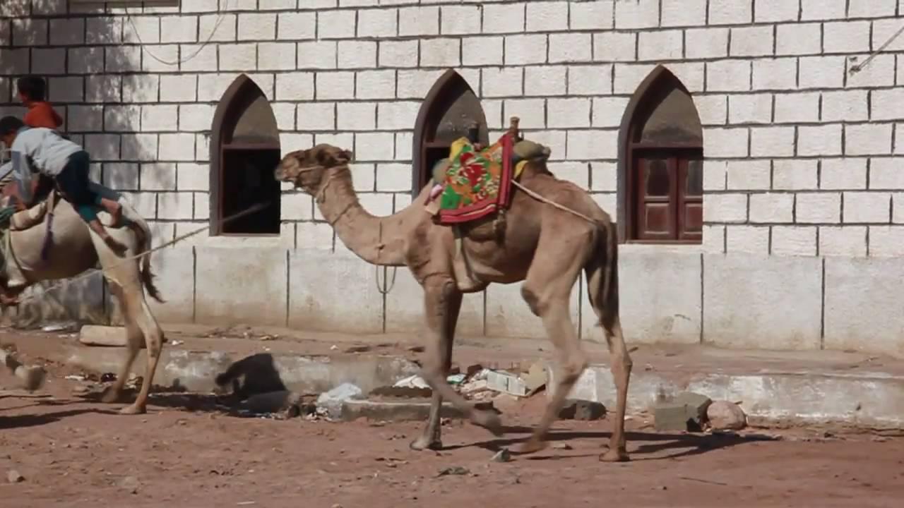 14ab4e1d0b21 Journey to Sinai