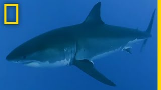 What Shark Is Attacking Tourists? | SharkFest