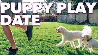 PUPPY PLAY DATE WITH DAN AND CHELLE DOG | PUPPIES PLAYING TOGETHER | PUPPY DOG PALS PLAYING OUTSIDE