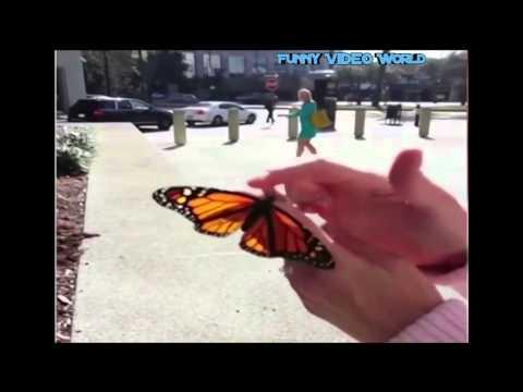 Schmetterlings erster Flug endet im Desaster