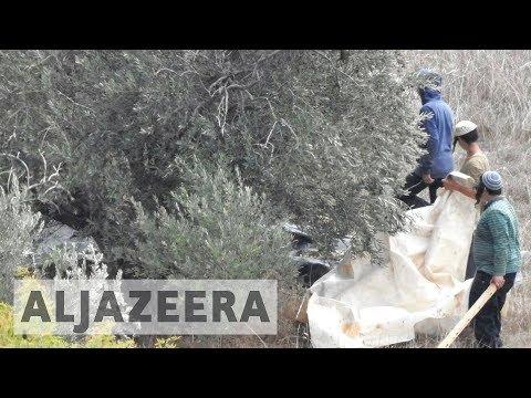 Israeli settlers injure Palestinian olive farmers