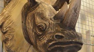 Выпуск № 027. Домашний носорог. Правила содержания